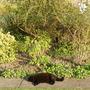 Spring_2010_006