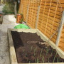 large raised bed with grapevine