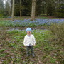 Edward and the bluebells