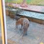 fox on the back patio