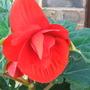 Garden_jul_07_040