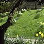 Spring_flowers_1