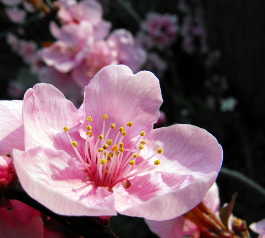 Close Up Of Blossom