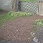 last year's leaves...mulched into a new pathway covering...