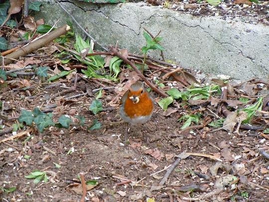 Robin having lunch
