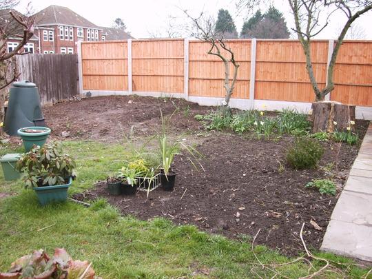 Veggie patch - The Beginning
