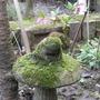 Mossy Frog (Rana temporaria)