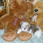 Pebbles with my Teddys