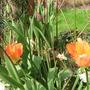 Garden_flowers_150410_048