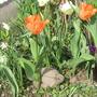 Garden_flowers_150410_049