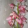 Garden_flowers_150410_052