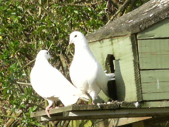 Snowball & Snowdrop are homemaking ...