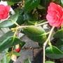 Friday_16th_april_10...spring_stuff..._004