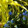 Garden17th10_017