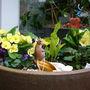 Spring Mouse (Lilium Nepalense)