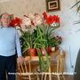 Amaryllis seedlings in living room with David 2010-04-17 (Amaryllis Hippeastrum)