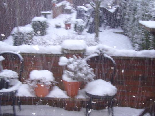 garden in the snow jan.2010