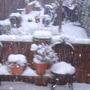 Garden_in_the_snow_benji_005