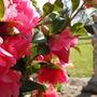 Garden_scenes_1
