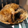 Puss Looking Cosy On Patio Chair Cushion