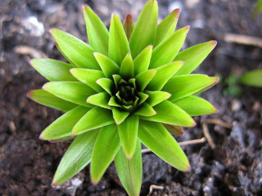 Flowers Bulbs n Macro photos 2010