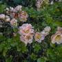 Garden_april_10_004