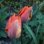 Garden_april_10_001