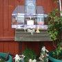 Victorian_greenhouse_008