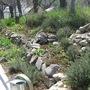 My thyme garden