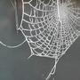 Sparkling Spider's Web.