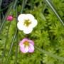 Garden7_020