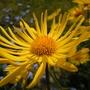 Inlaws_garden_240410.jpg