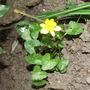 flower /weed