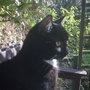 gaia enjoying the morning sunshine