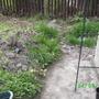 ladybugs garden