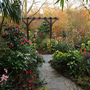 pergola - looking down the garden