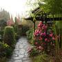 pagoda camellia