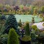 Upper_garden_daffodils