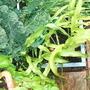 Garden_jul_07_012