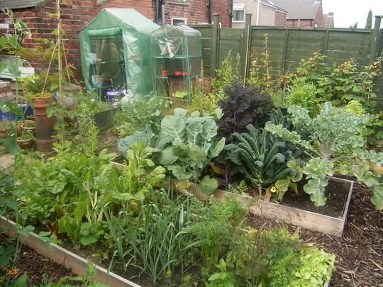 My Very Own Kitchen Garden!