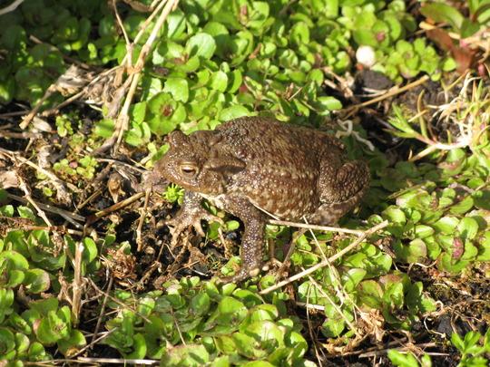 Hello Mr Toad,