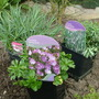 New_plants_012