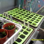 Seed_trays