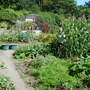 The giant sweetcorn patch!