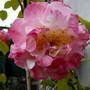 Garden_17_4_2010_033
