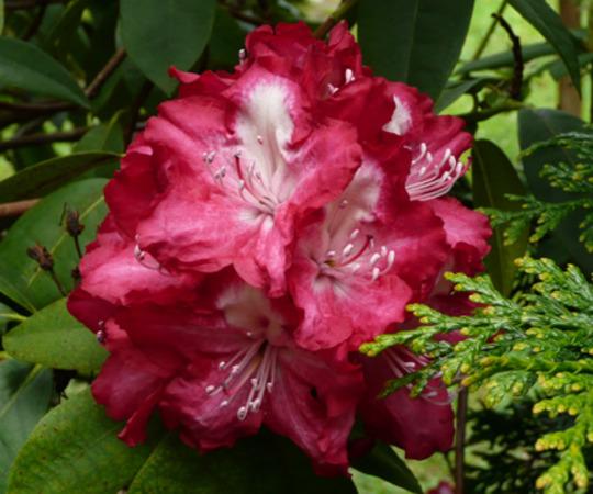 garden_17-4-_2010_006.jpg