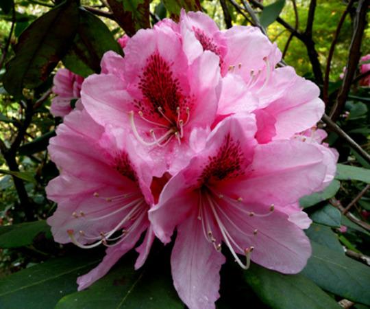 garden_17-4-_2010_039.jpg