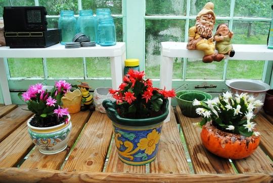 Spring cactus.jpg