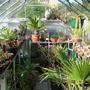 The cactus house interior