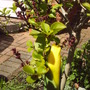 Front_garden_2_may